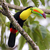 Panama - Canal Zone Birds & Wildlife