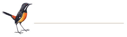Rockjumper Birding Tours - Worldwide Bird Tours
